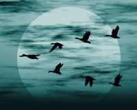 migracion-azulverdoso-peque.jpg